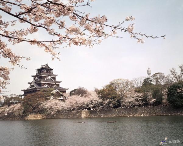 chateauhiroshima-sakura