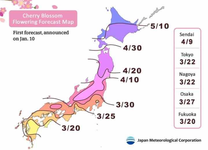 météo de la floraison des cerisiers au japon 2019